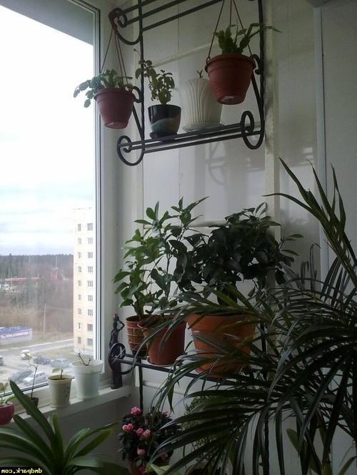 Пожарная лестница с озеленением